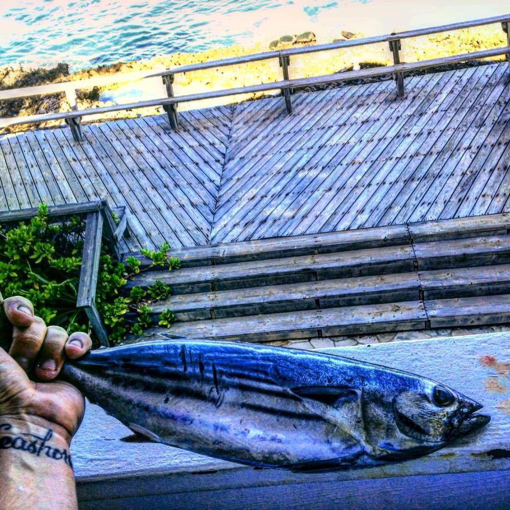Maui sporting goods spearfishing specialties 23 reviews for Fishing supplies honolulu