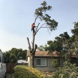 Photo Of Clovis Tree Service Ca United States