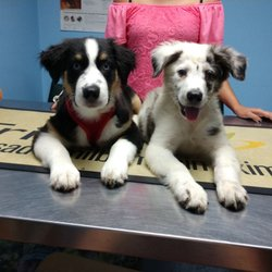 Quality Puppies USA - Pet Stores - Ocala, FL - Phone Number