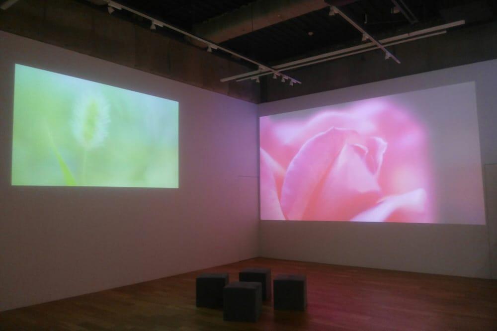Sony Imaging Gallery