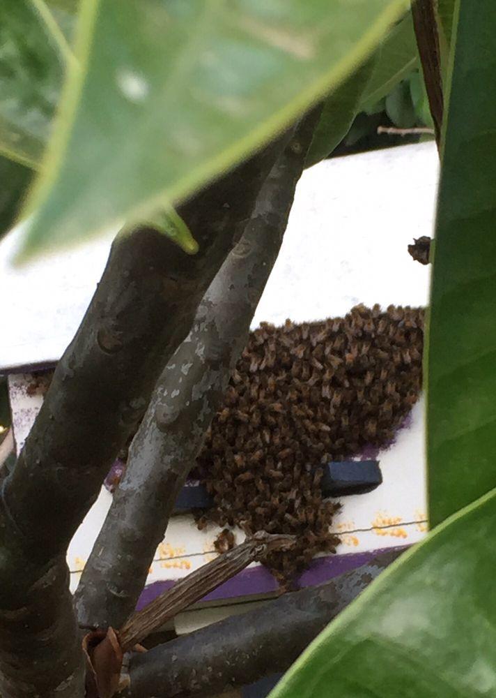 The OC Bee Guy