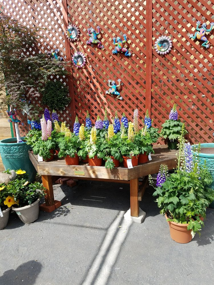 Photo Of Green Thumb Nursery San Marcos Ca United States