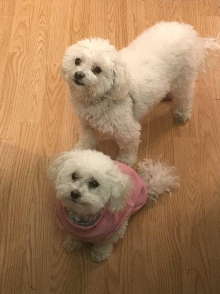 MGB Pet Sitters