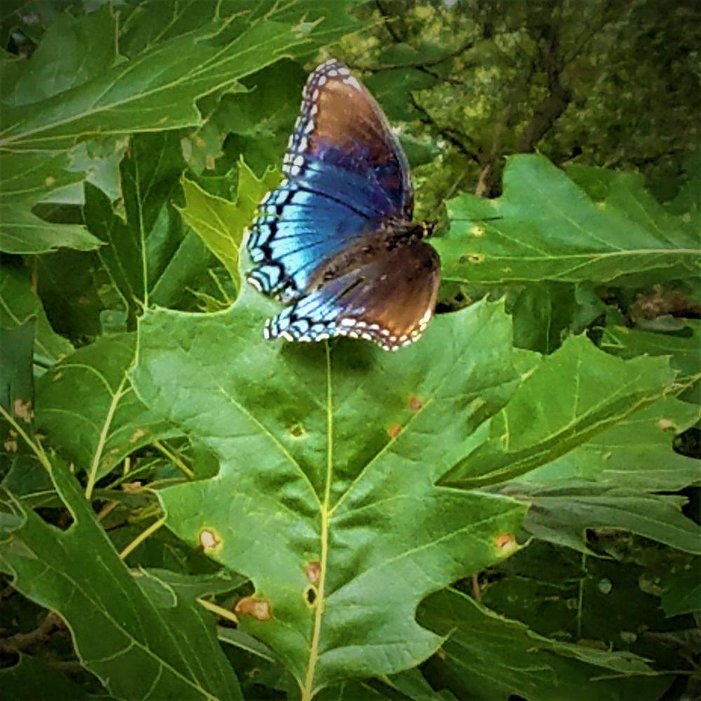 Fisher Oak Savanna Nature Preserve: 1100 County Rd, Wolcott, IN
