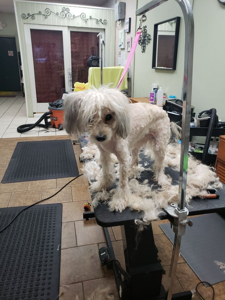 Healthy Pet Grooming & Supply: 563 Muncey Rd, West Islip, NY