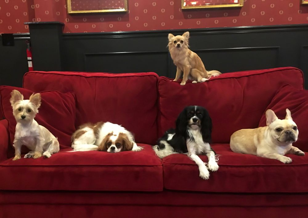 Executive Dog Lounge