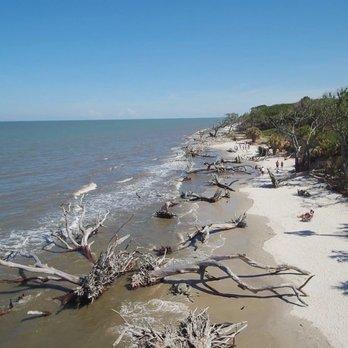 Photo Of Driftwood Beach Jekyll Island Ga United States