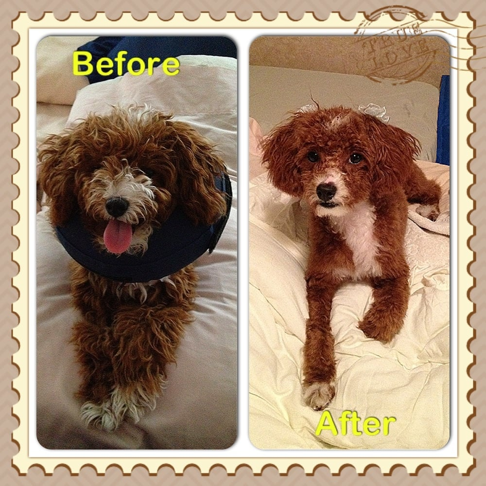 Angel Tails Dog Grooming