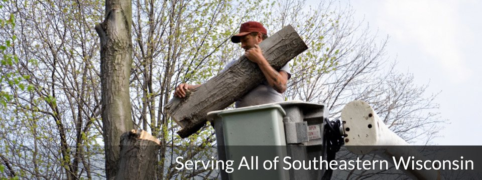 Darryl's Tree Service: Brookfield, WI