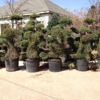 Photo Of Tea Garden Nursery Arlington Tx United States Can You See