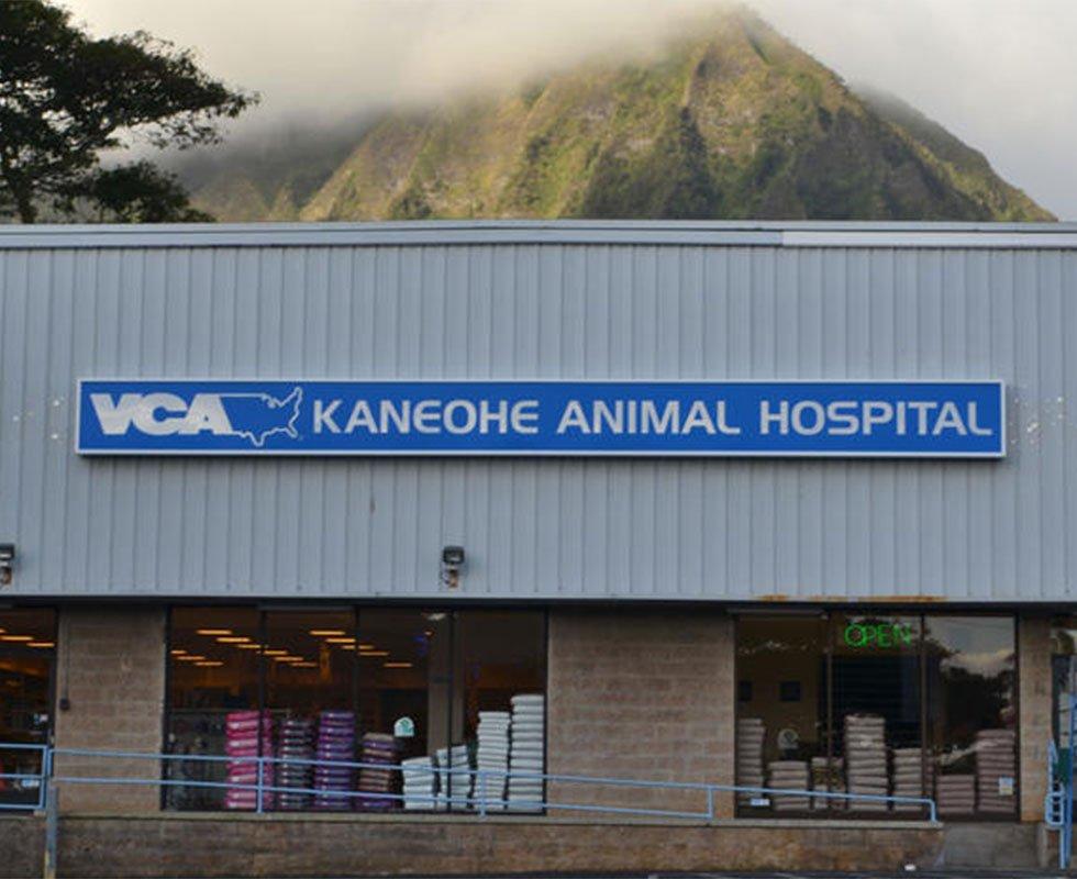 VCA Kaneohe Animal Hospital - 49 Photos & 99 Reviews