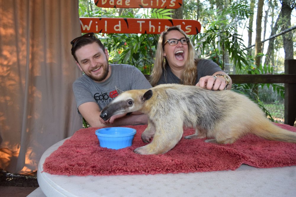 Social Spots from Dade City's Wild Things