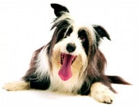 In-Home Pet Services: Cudahy, WI
