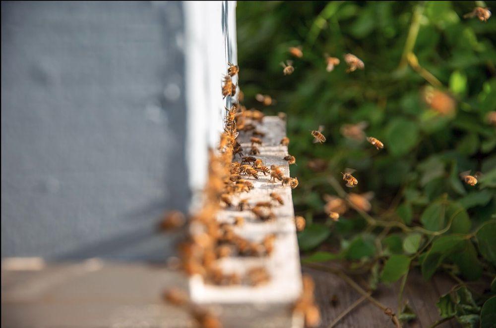 Maui Bees: 150 Pulehunui Rd, Kula, HI