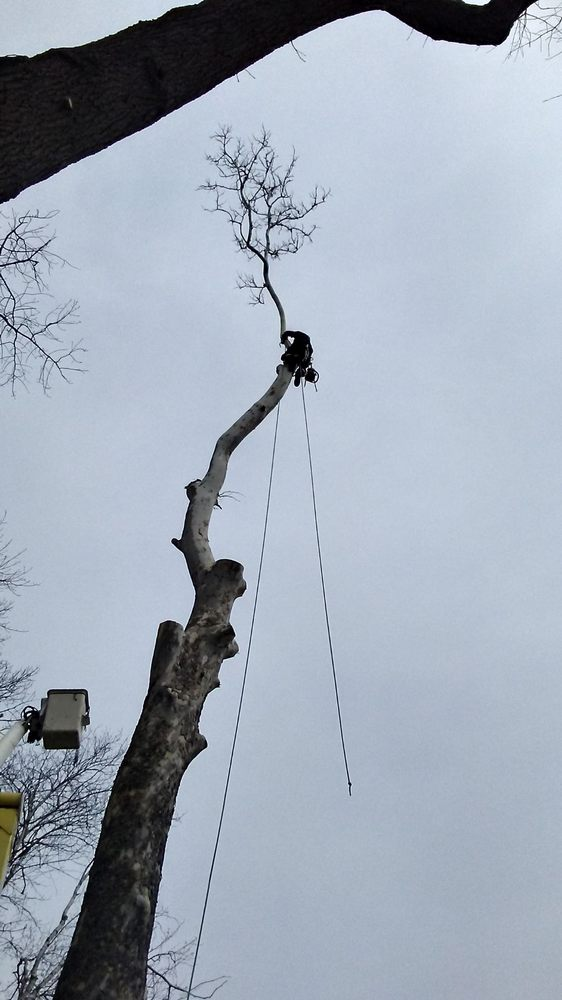 A-Way Tree Experts: 3944 West 150 S, Angola, IN