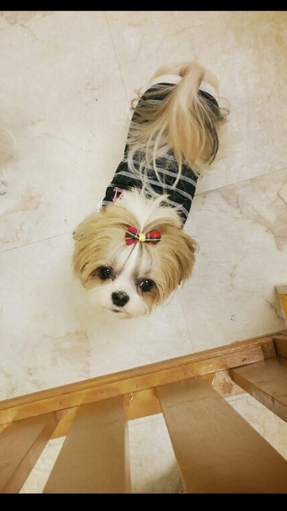 Pampers Dog Grooming: 1134 S Western Ave, Los Angeles, CA