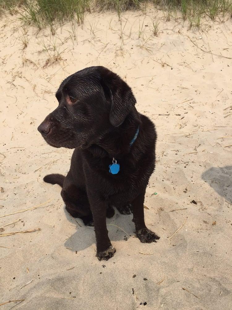 Kruse Park Dog Beach