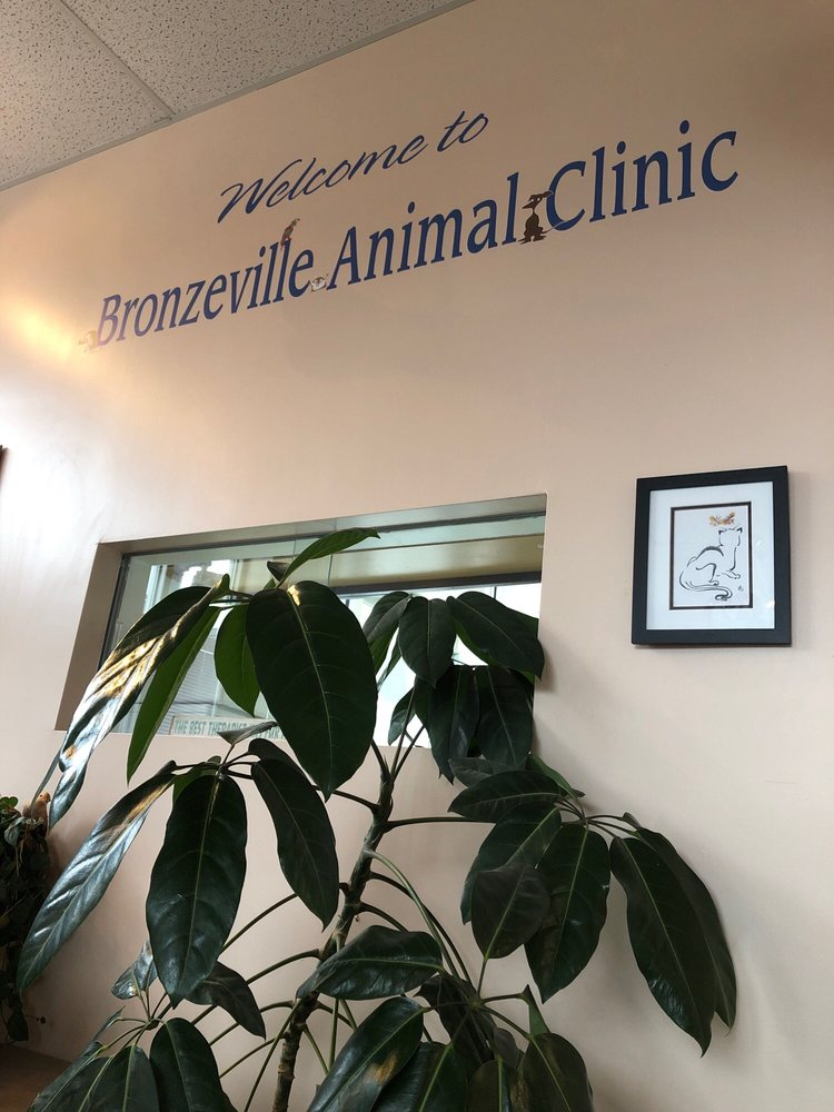Bronzeville Animal Clinic: 203 E 31st St, Chicago, IL