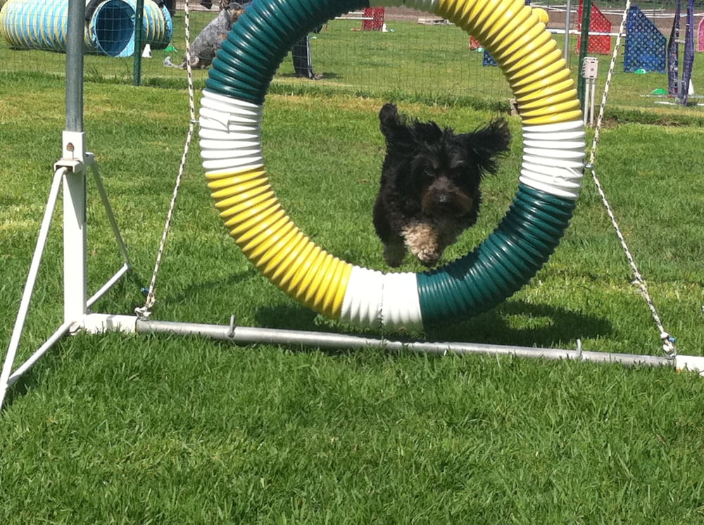 Westside Dog Sports: West Los Angeles, CA