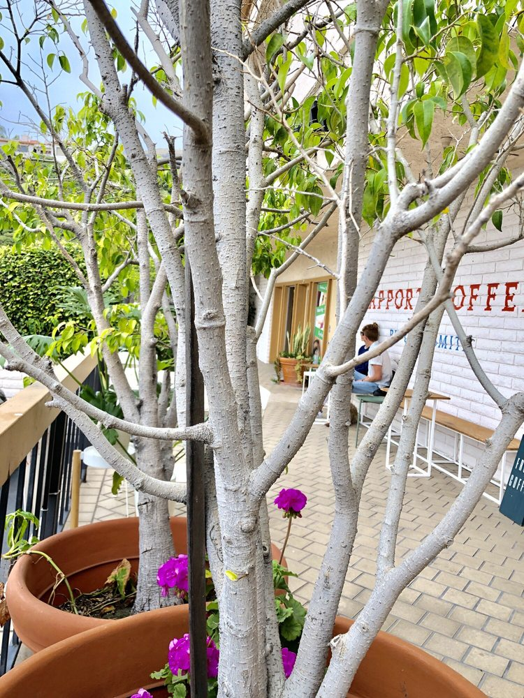 راپورت قهوه توسط کافه اسمیت