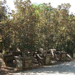 Tops nursery 78 fotos viveros y jardiner a 18809 for Vivero las magnolias