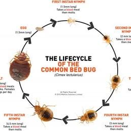 Bed Bug Services Pest Control 50 Congress Crescent Hamilton On