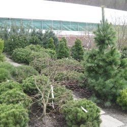 Evergreen Gartenbau gartenbau kerschdorfer landscaping wäscherweg 6 stumm tirol