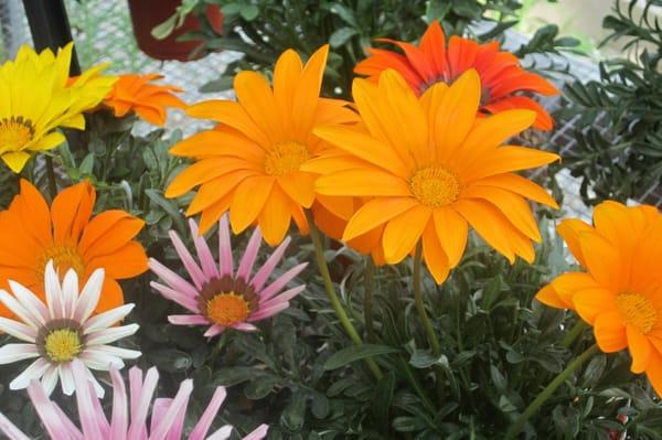 Velvet Greene Garden Center Landscaping 381 Sturbridge Rd