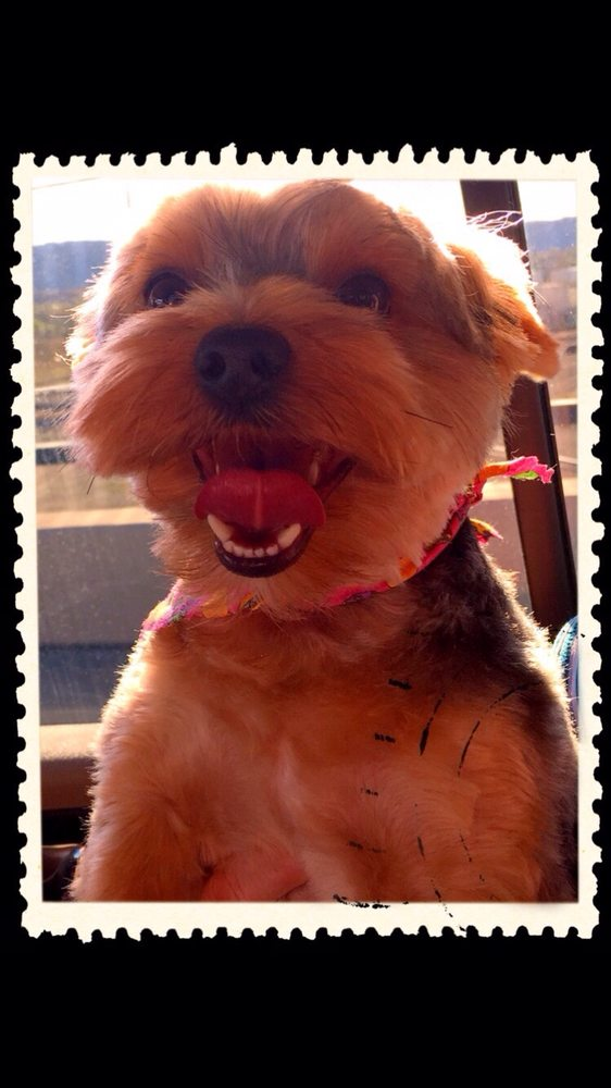 TLC Grooming By Danielle: 1141 N 25th St, Grand Junction, CO