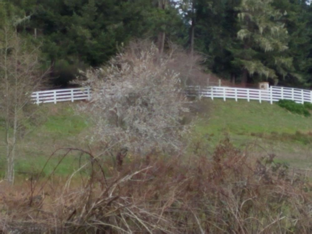 Taylor Enterprise Fencing: 65 Graham Way, Loleta, CA