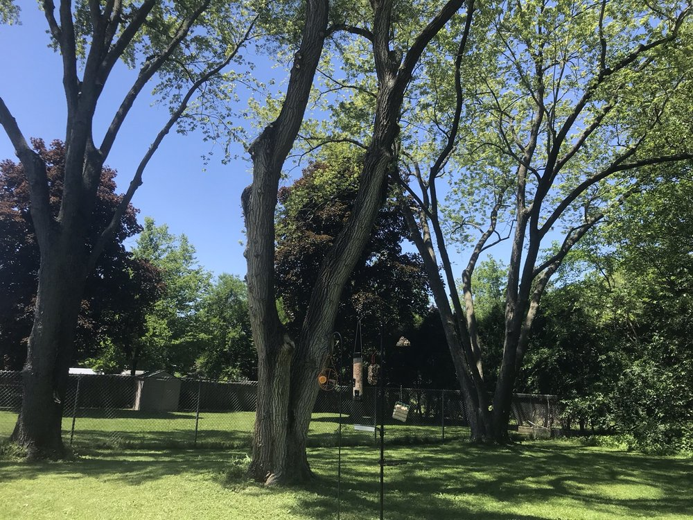 The Branch Office Tree Service: 429 McKinley Ave, Libertyville, IL