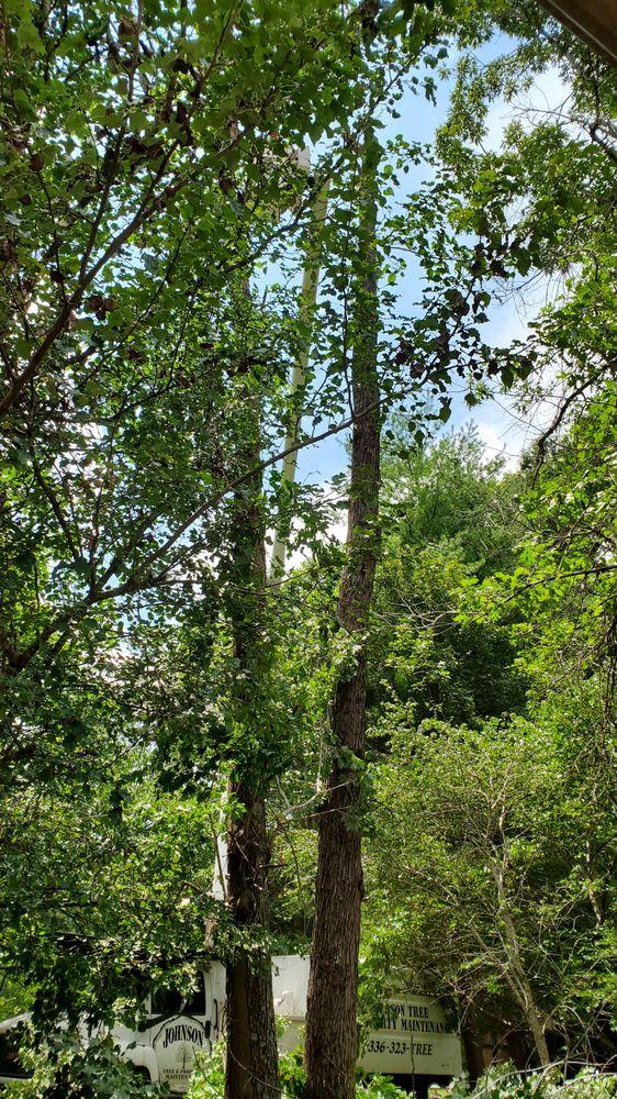Johnson Tree & Property Maintenance: 2134 Snead Rd, Stoneville, NC