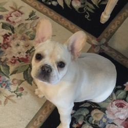 Jean Kelly Request A Quote Pet Breeders Dighton Ma Phone