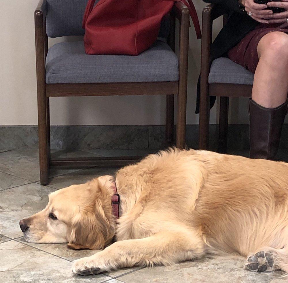Goldsmith Veterinary Clinic: 6777 E Hampden Ave, Denver, CO