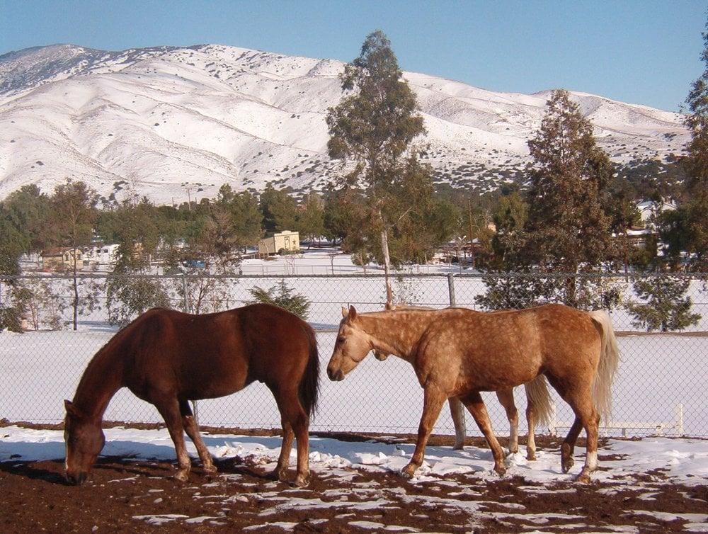 Shamrock T Ranch: 8927 Hierba Rd, Agua Dulce, CA