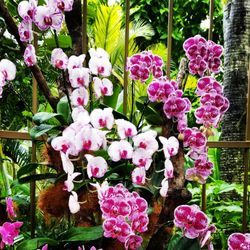 Photo Of National Orchid Garden   Singapore, ...