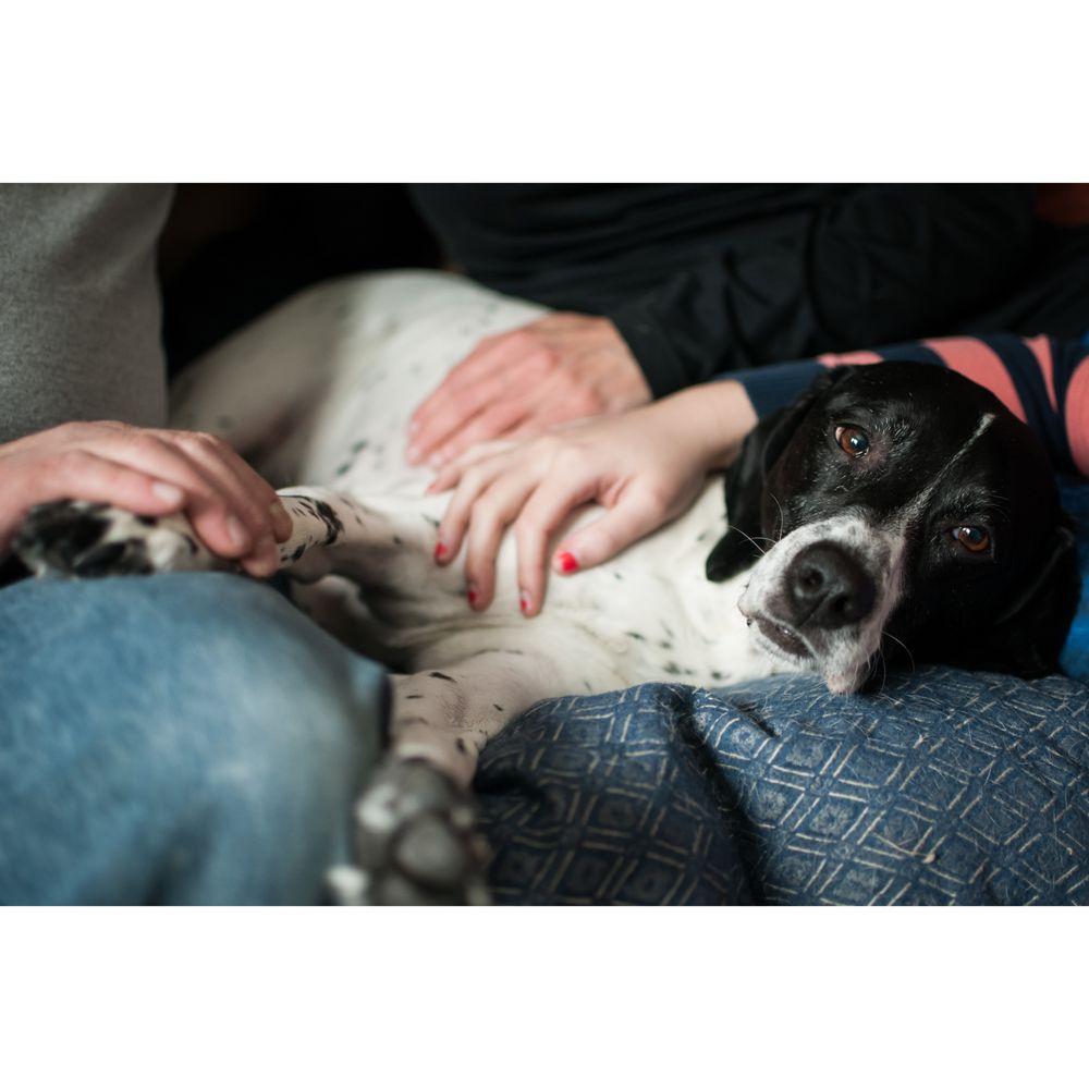 Creature Comforts Mobile Veterinary Clinic: 90 Rte 39 S, Sherman, CT