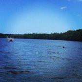 Photo Of Naples Bay Resort Boat Als Fl United States Dolphins