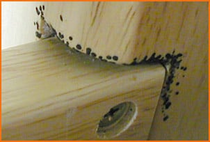Bed Bug Defecation On Wood Bed Frame Where They Enter Hiding Spot