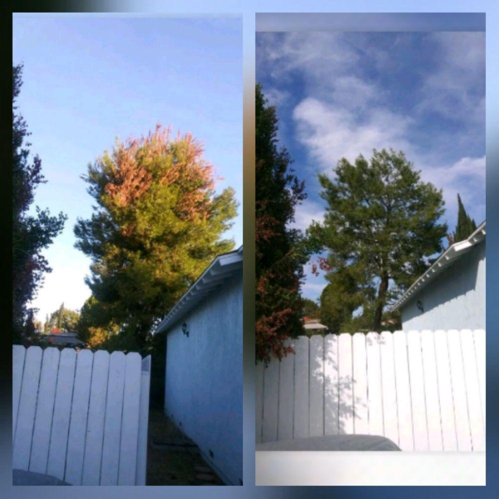 Garcia Gardening Services: Altadena, CA