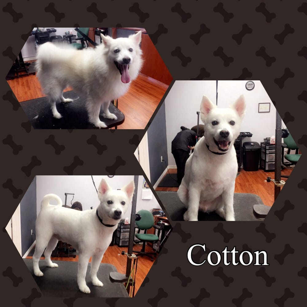 P S And Q S Dog Grooming Lutz Fl