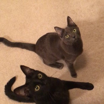 Pawpurrs Kitten Rescue - 14 Photos & 10 Reviews - Animal Shelters