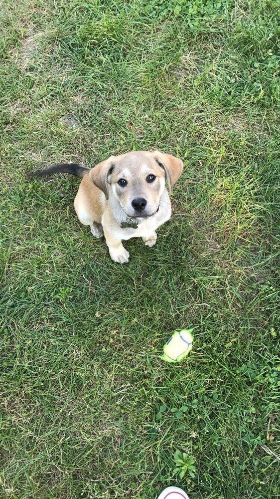 Best Buddy Dog Training: 80 Lake St, Plainfield, CT