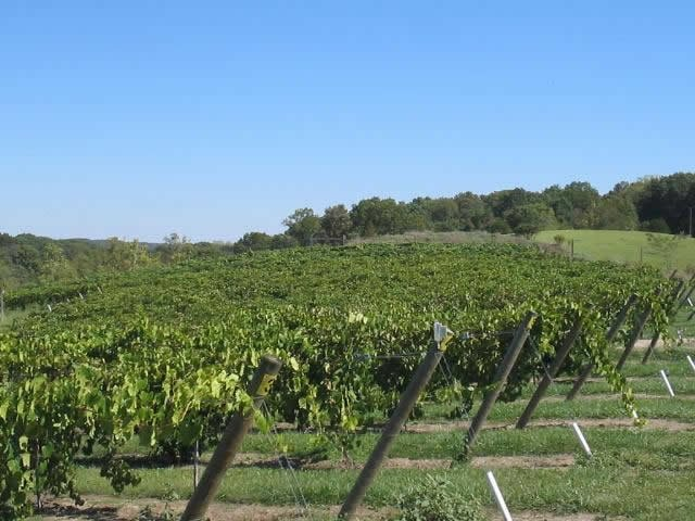 Ridge View Winery: 529 200 N Ave, Mt Sterling, IL