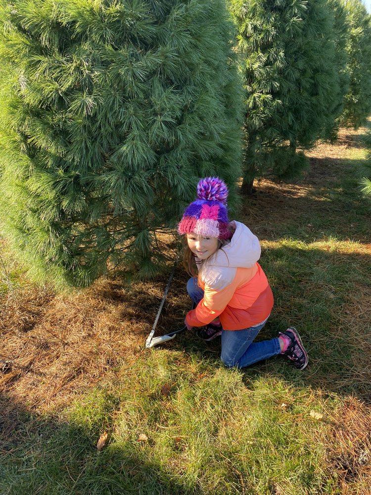 Wapsie Pines Tree Farm: 2778 Whitetail Ave, Fairbank, IA