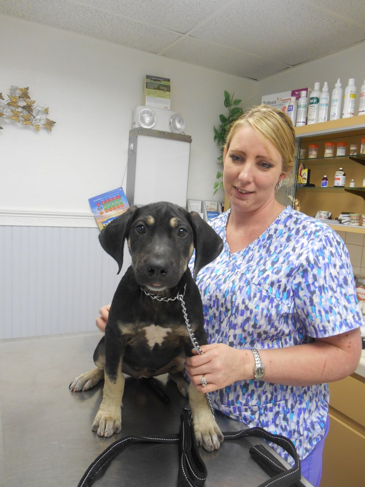 Park Animal Hospital: 8065 66th St N, Pinellas Park, FL