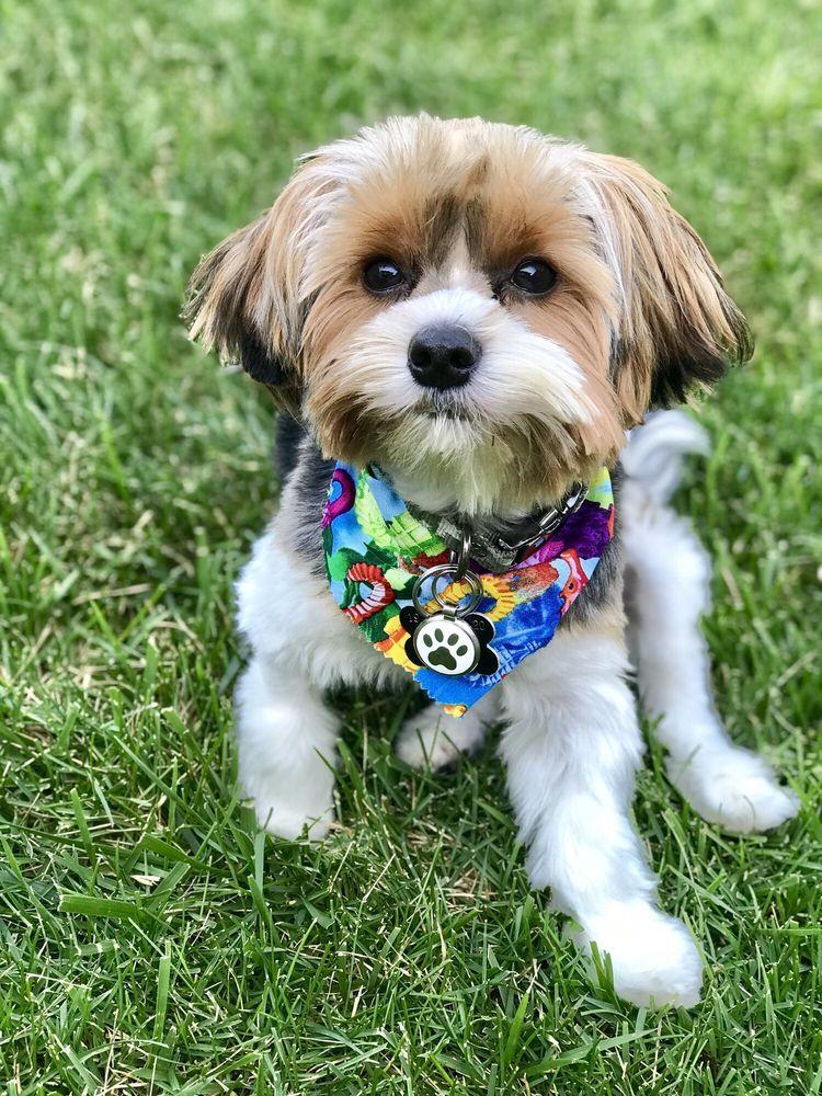 Canine Designing: 7541 W Montrose Ave, Norridge, IL