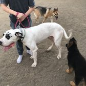 Specialty Dog Training 35 Photos 39 Reviews Pet Training