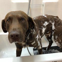 shakers dog wash