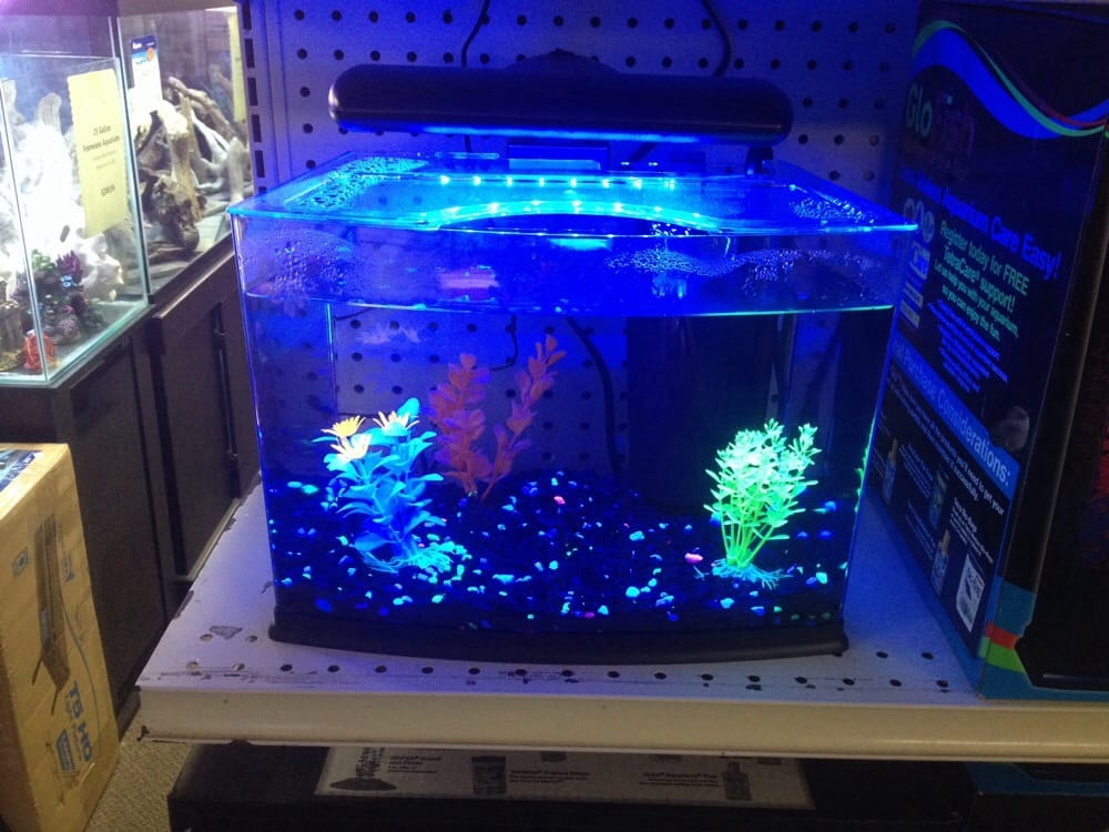 photo of world of pets florence ky united states glo fish tanks